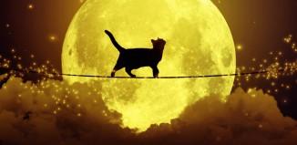 Black Cat camapign_Samsung New Zealnd