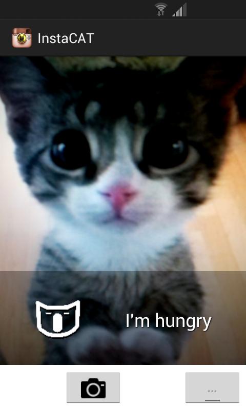insta-cat-picture