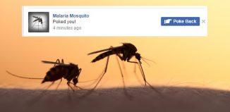 Malarai Mosquito