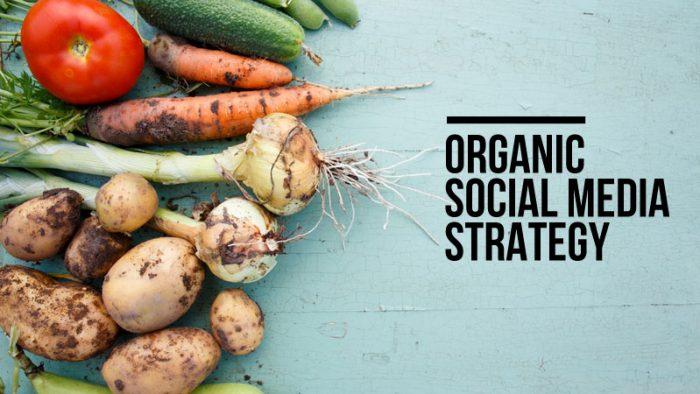 Organic Social Media Strategy
