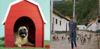 Vodafone Pug Campaign