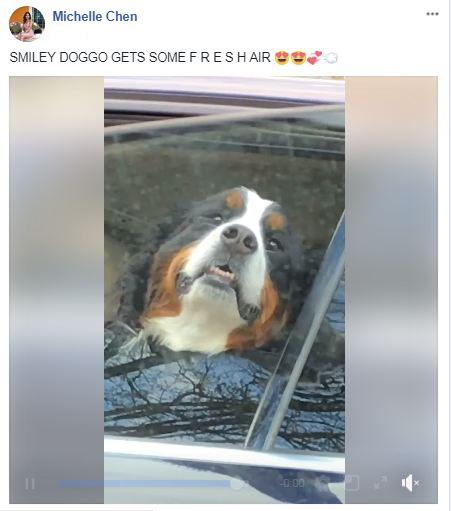 Dogspotting
