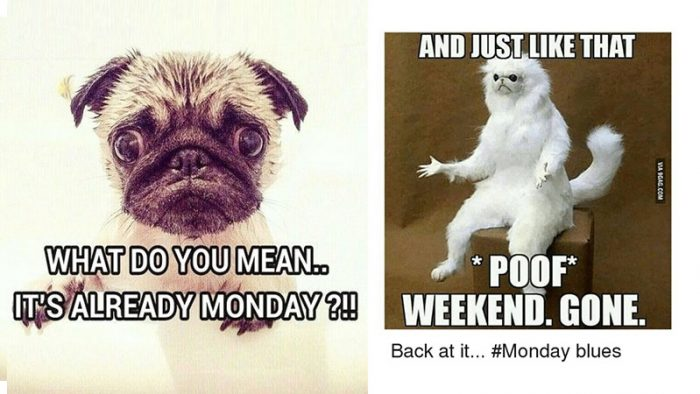 These painfully funny Monday memes are so accurate that it ...