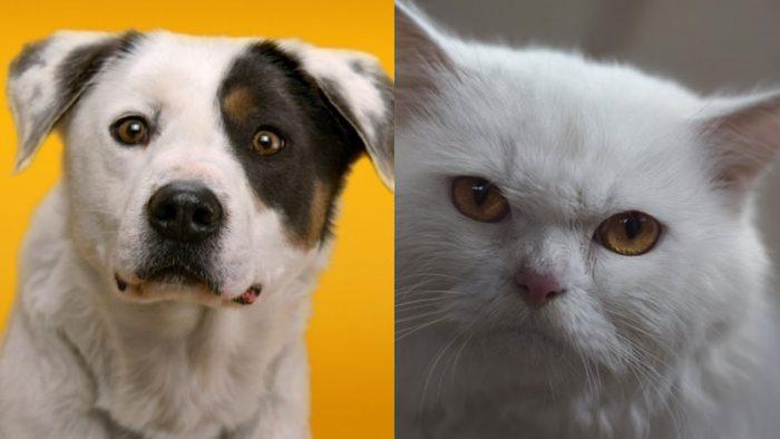 animal brand ambassadors
