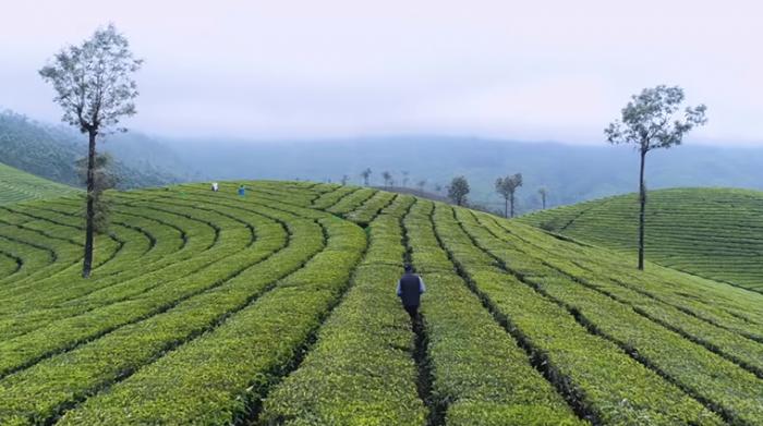 Kerala Tourism campaign