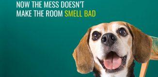 International Dog Day brand posts