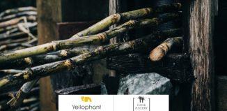 Yellophant Digital