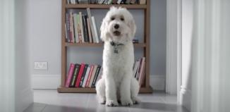 P&G Flash Dog audio descriptions inclusive advertising
